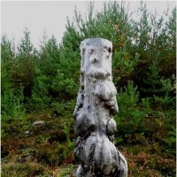 Пень  в лесу. :: Андрей