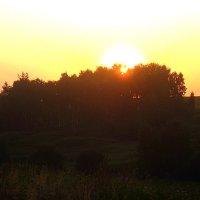 Встанет солнце над лесом... :: оля san-alondra