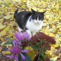 Осенний сон: во сне танцует кошка вальс-бостон!... :: Алекс Аро Аро