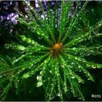 После дождя. :: Андрей