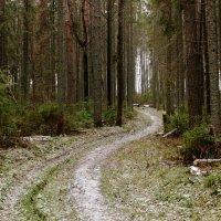 По лесной тропинке :: Татьяна Шаклеина