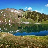 Альпийская весна :: Elena Wymann