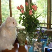 на окне с цветами :: Венера Чуйкова