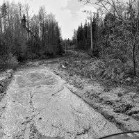 Дорога в Карпатах :: Роман Савоцкий