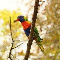 Попугай из пражского зоопарка :: Леся Сафронова