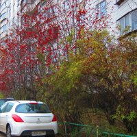 Осень :: Людмила Монахова