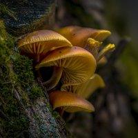Ноябрьские грибы :: Алексей Строганов