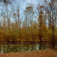 Осень в лесу :: Алексей Бойко