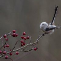 Птичечка :: Елена Шел