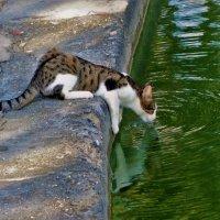 Попить из озера... :: Sergey Gordoff