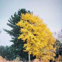 Осень :: Александр Чупин
