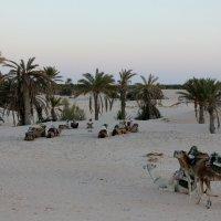 Отдых в Сахаре :: Алексей Поляков