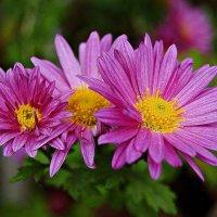 цветы осени :: Александр Корчемный