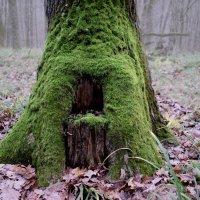 туман в лесу :: Алина