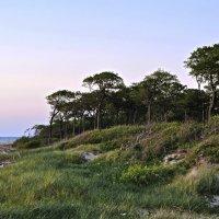 Сумерки в дюнах. Twilight in the dunes. :: Юрий Воронов