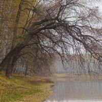Краски осени златой плавно угасали... :: Елена Ярова
