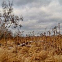 Осенний пейзаж :: Aleksandr Ivanov67 Иванов
