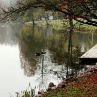 На озере. :: Людмила Шнайдер