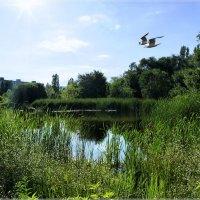 Вид на местный пруд. :: Anatol Livtsov