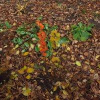 Напоминание о цветной части осени :: Андрей Лукьянов