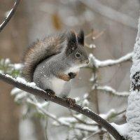 Холодно - блин. :: Алексей .