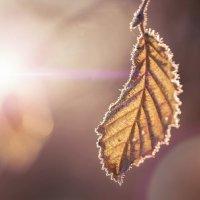 Солнечный свет. :: Ron Леви