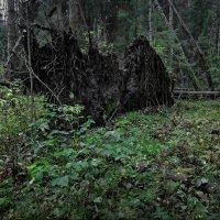В тёмном - тёмном лесу! :: Владимир Шошин