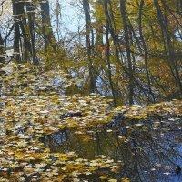 Листья опали, стволы оголились... :: Маргарита Батырева