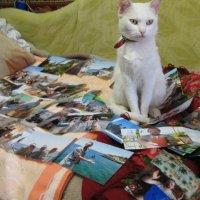 Отдых в Крыму глазами кошки... :: Алекс Аро Аро