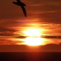 На горизонте остров Гренландия :: Анатолий Кузьмин