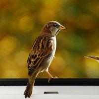 обозреваю... :: linnud