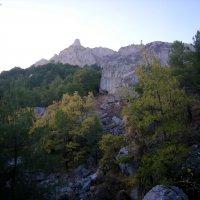 В лесу под Ай-Петри :: Руслан Newman
