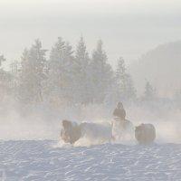 Закаленные холодом :: Михаил Потапов