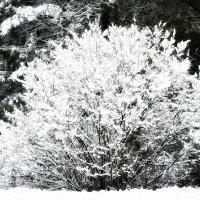 Выпал снег. :: Михаил Столяров