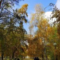 Как красив парк осенью. :: Anna Gornostayeva