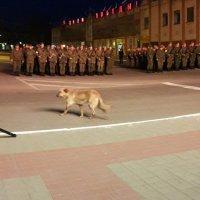 Командовать парадом буду я! :: Sergey Polovnikov