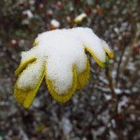 Первый снег. А для них и последний :: Андрей Лукьянов