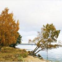 Осень у моря. :: Валерия Комова
