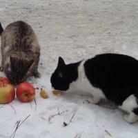 Яблоки в снегу - какое чудо! :: Алекс Аро Аро
