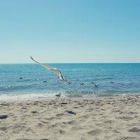 Морская чайка :: Swetlana V