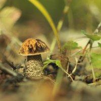 Осенний гриб :: ARS