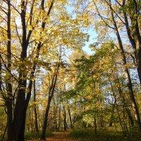 Санкт-Петербург. Провожая золотую осень. :: Лариса (Phinikia) Двойникова