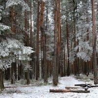 Заиндевелый лес. :: Наталья