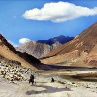 Солевые озера в Индии :: Клара