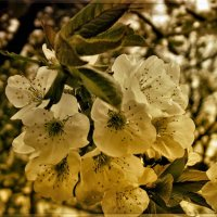 Немного весны... :: isanit Sergey Breus
