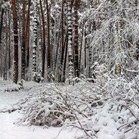 Ноябрьский снег пушист и мягок... :: Лесо-Вед (Баранов)