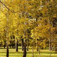 Светлая осень :: Павел Руденко