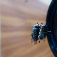 осенняя муха на зеркале :: Александр Прокудин