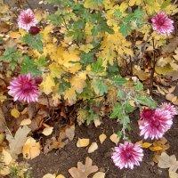 Осенние краски :: Нина Корешкова