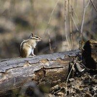 случайная встреча в лесу.. :: Татьяна Башкирова